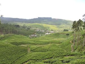 WANTED - BUYERS - TEA ESTATE AND TEA FACTORY in Sri Lanka