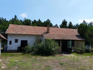 Old farmhouse in pine forest 10mins from city of Szeged