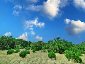 Wooded Lot in Canyon Lake - Canyon Lake TX 78133